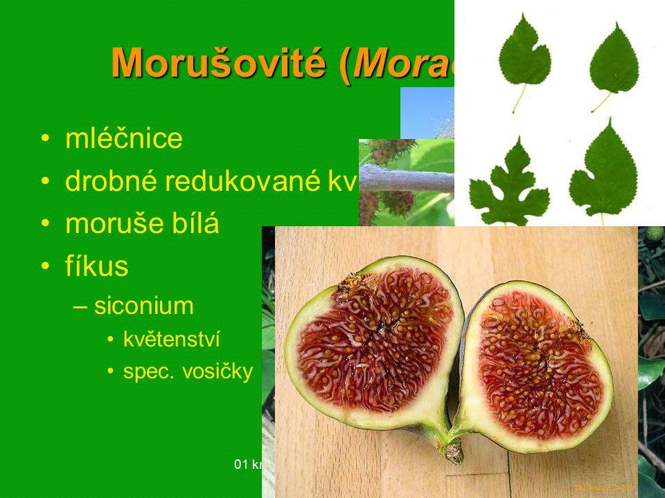 Morušovité (Moraceae)