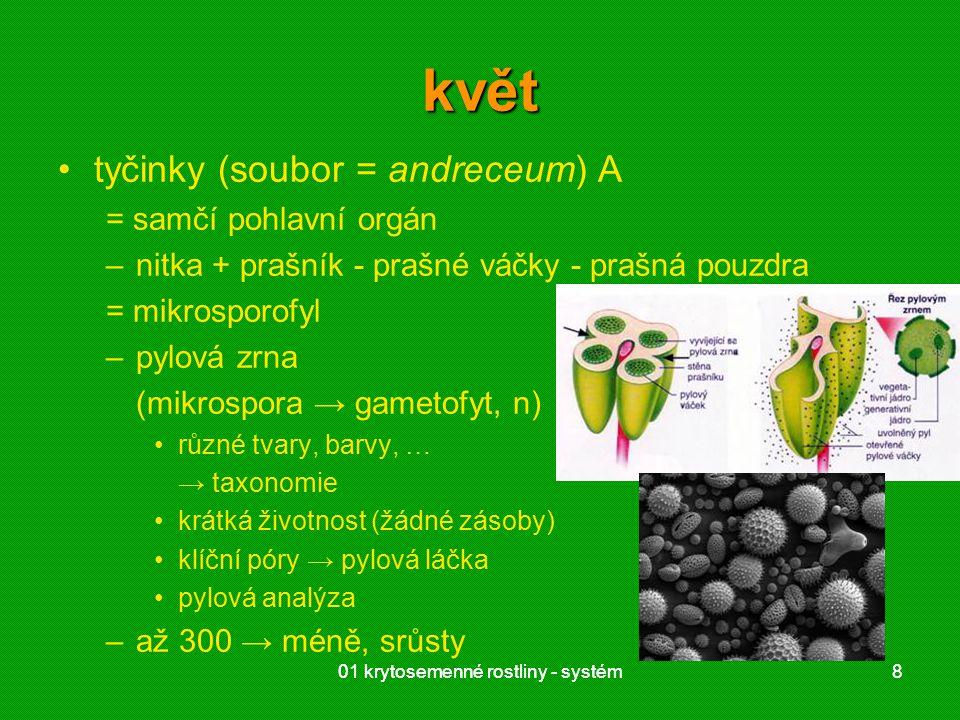 květ tyčinky (soubor = andreceum) A = samčí pohlavní orgán