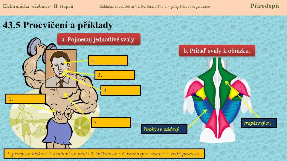 43.5 Procvičení a příklady a. Pojmenuj jednotlivé svaly.