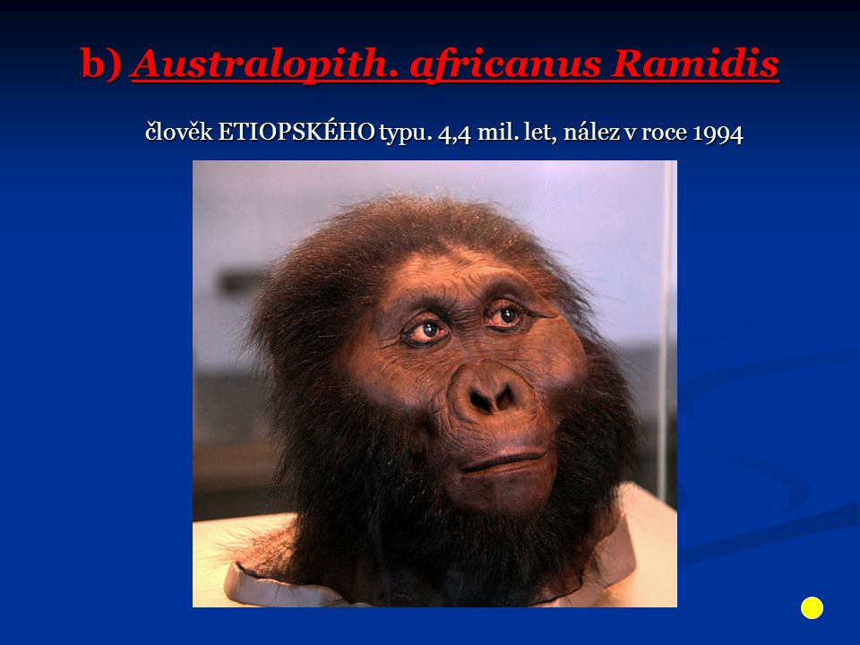b) Australopith. africanus Ramidis