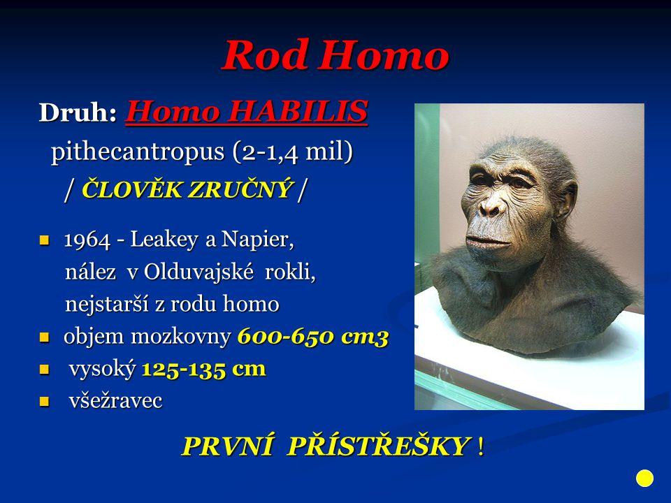 Rod Homo Druh: Homo HABILIS pithecantropus (2-1,4 mil)