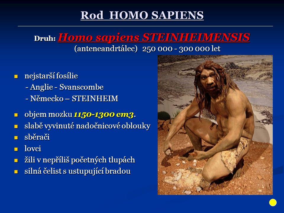Rod HOMO SAPIENS nejstarší fosílie - Anglie - Svanscombe