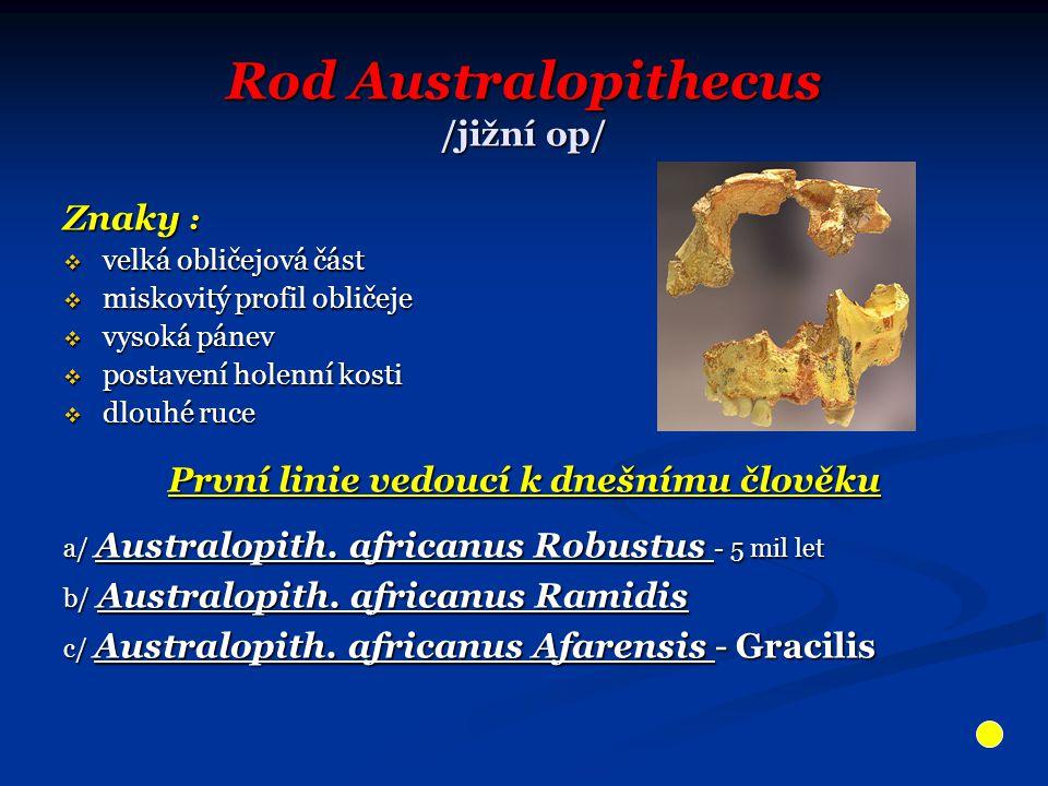 Rod Australopithecus /jižní op/