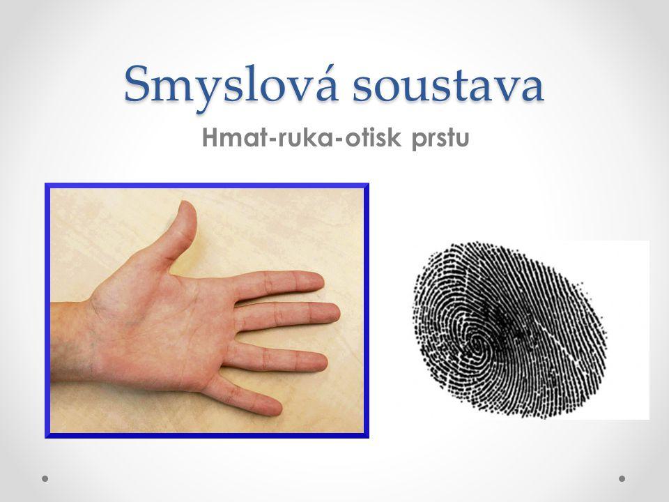 Smyslová soustava Hmat-ruka-otisk prstu