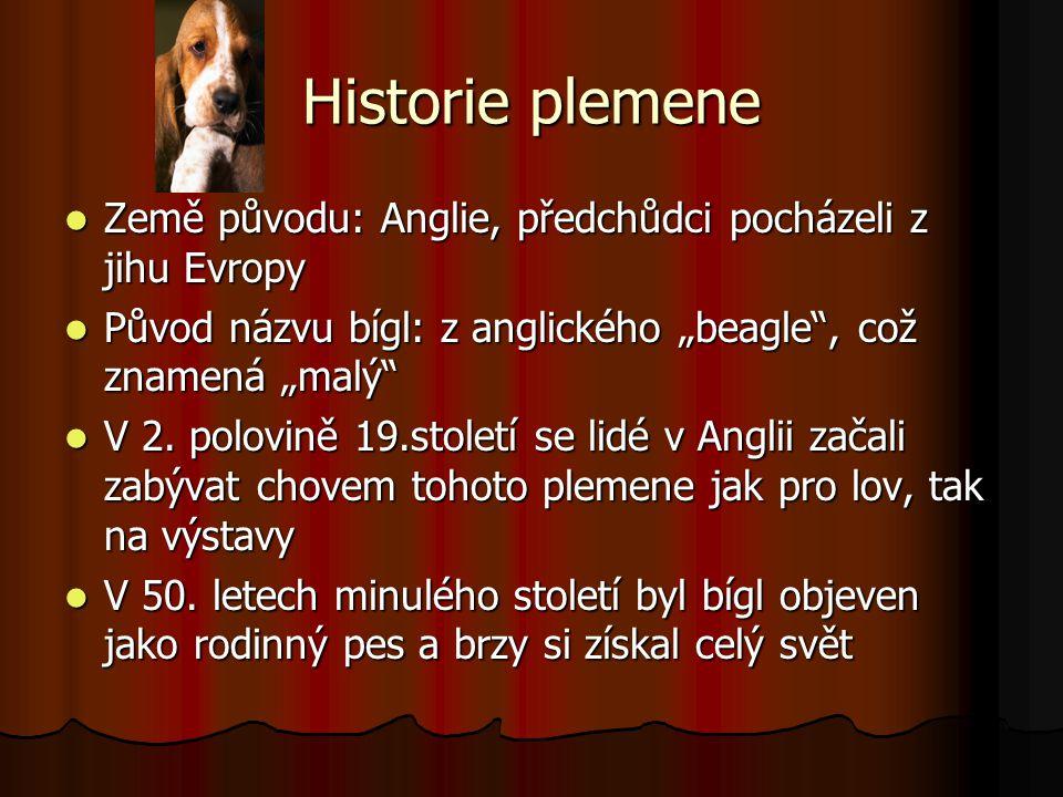 """Historie plemene Země původu: Anglie, předchůdci pocházeli z jihu Evropy. Původ názvu bígl: z anglického """"beagle , což znamená """"malý"""
