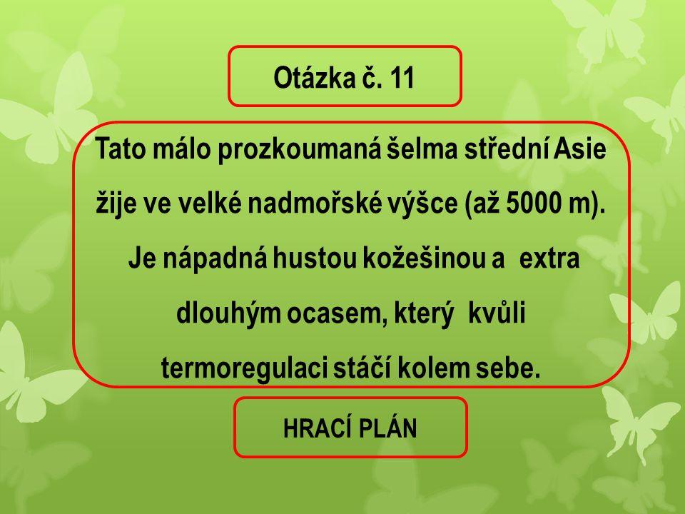 Otázka č. 11 Tato málo prozkoumaná šelma střední Asie žije ve velké nadmořské výšce (až 5000 m).