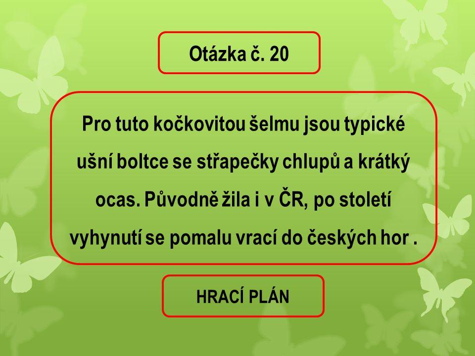 Otázka č. 20