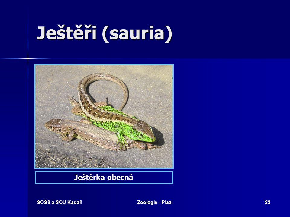 Ještěři (sauria) Ještěrka obecná SOŠS a SOU Kadaň Zoologie - Plazi