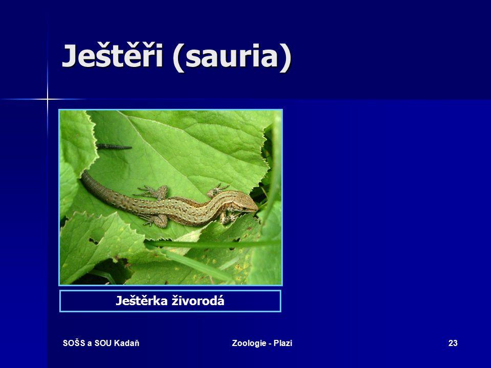 Ještěři (sauria) Ještěrka živorodá SOŠS a SOU Kadaň Zoologie - Plazi