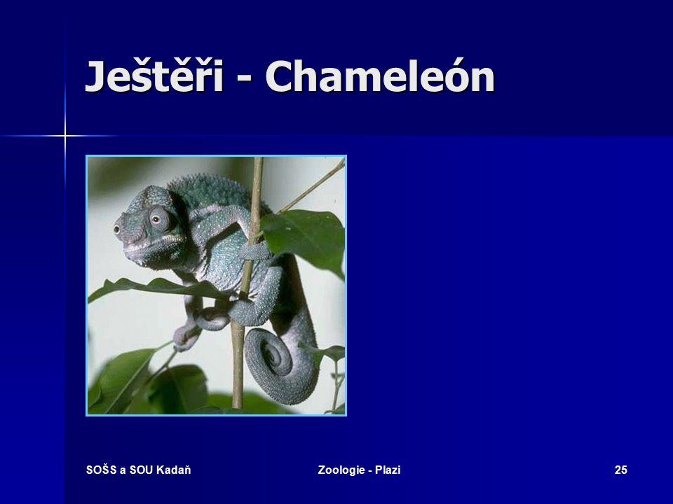 Ještěři - Chameleón SOŠS a SOU Kadaň Zoologie - Plazi
