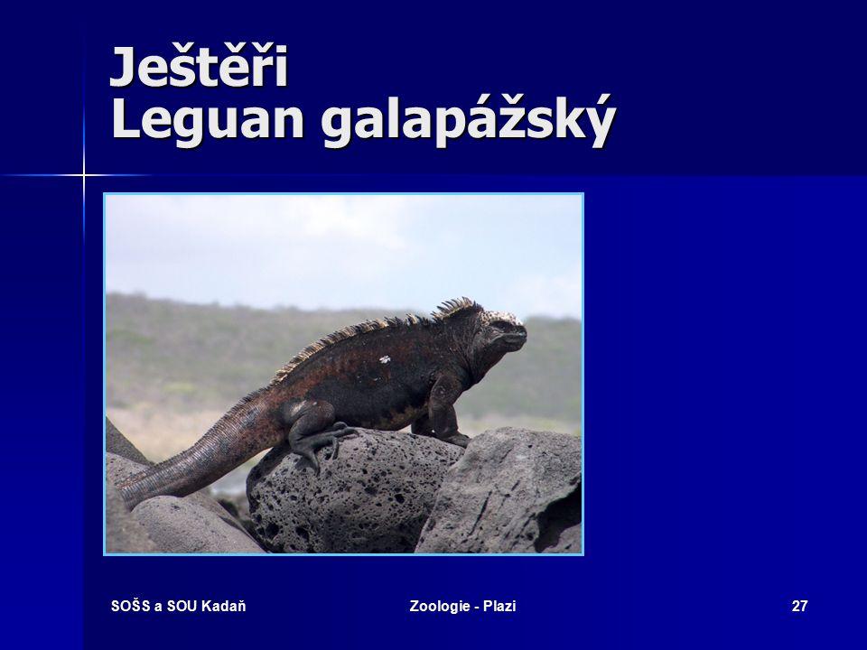 Ještěři Leguan galapážský