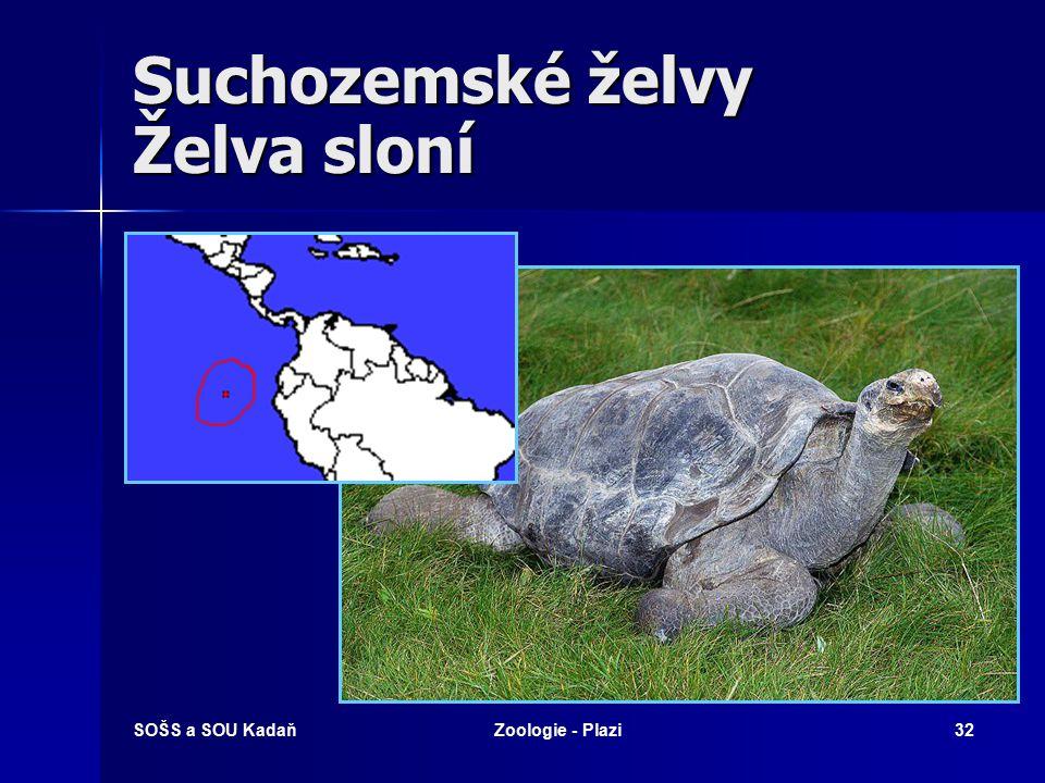 Suchozemské želvy Želva sloní