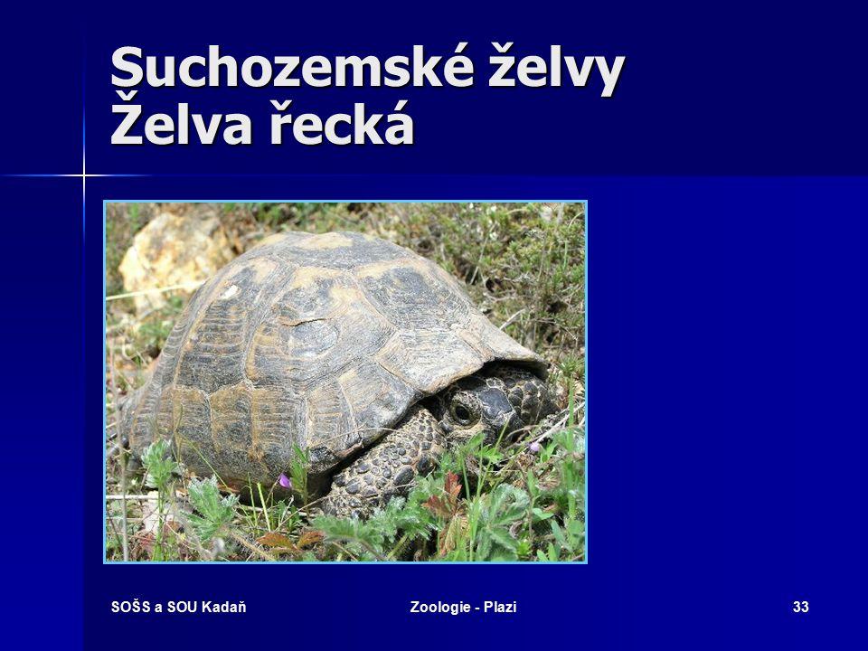Suchozemské želvy Želva řecká