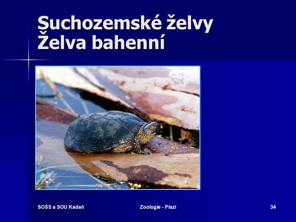 Suchozemské želvy Želva bahenní