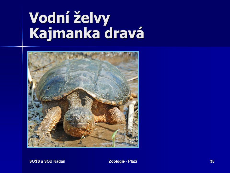 Vodní želvy Kajmanka dravá