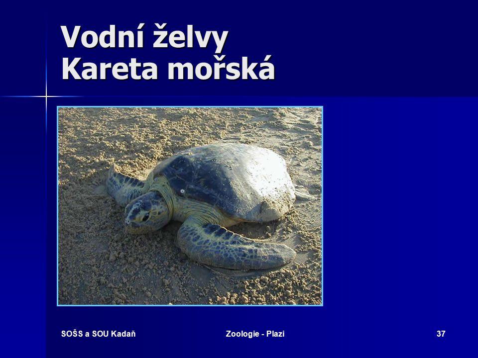 Vodní želvy Kareta mořská