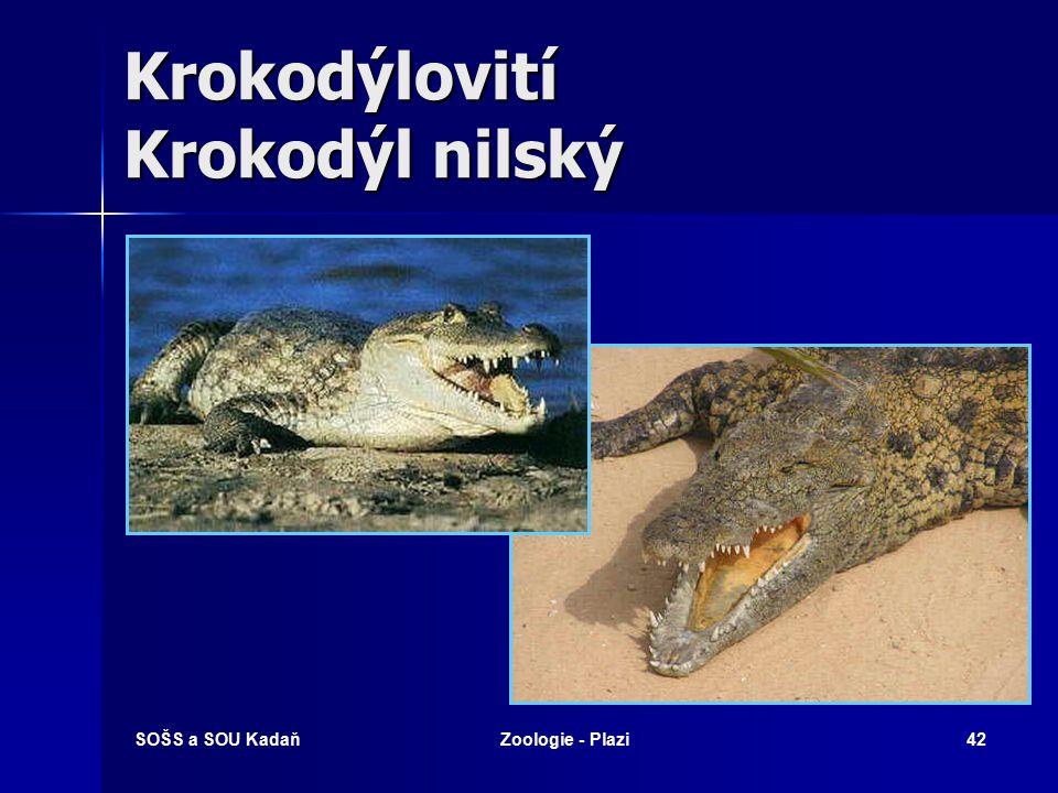 Krokodýlovití Krokodýl nilský
