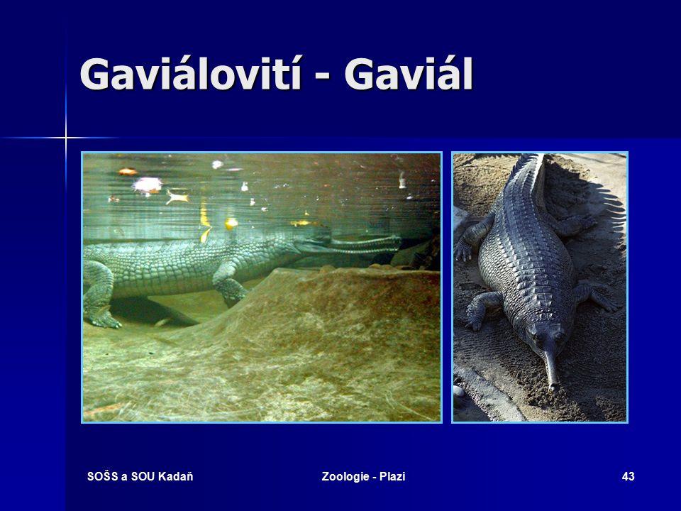 Gaviálovití - Gaviál SOŠS a SOU Kadaň Zoologie - Plazi