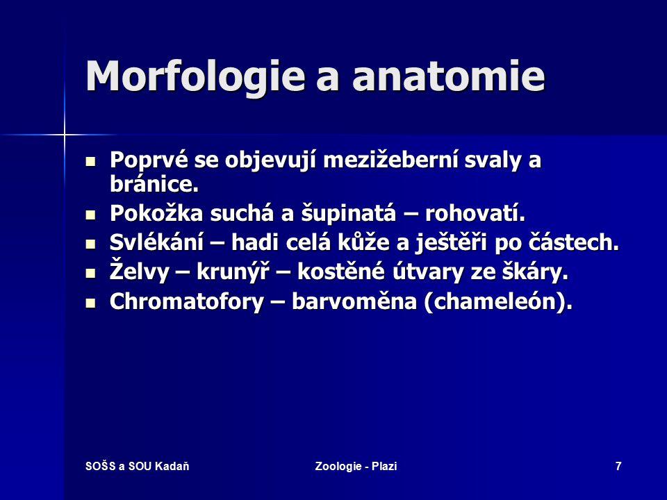 Morfologie a anatomie Poprvé se objevují mezižeberní svaly a bránice.