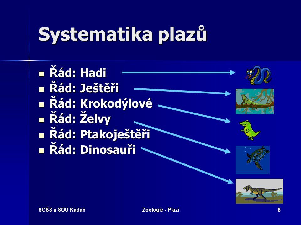 Systematika plazů Řád: Hadi Řád: Ještěři Řád: Krokodýlové Řád: Želvy