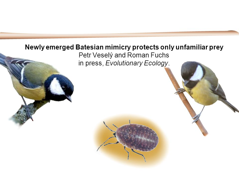 Newly emerged Batesian mimicry protects only unfamiliar prey Petr Veselý and Roman Fuchs in press, Evolutionary Ecology.