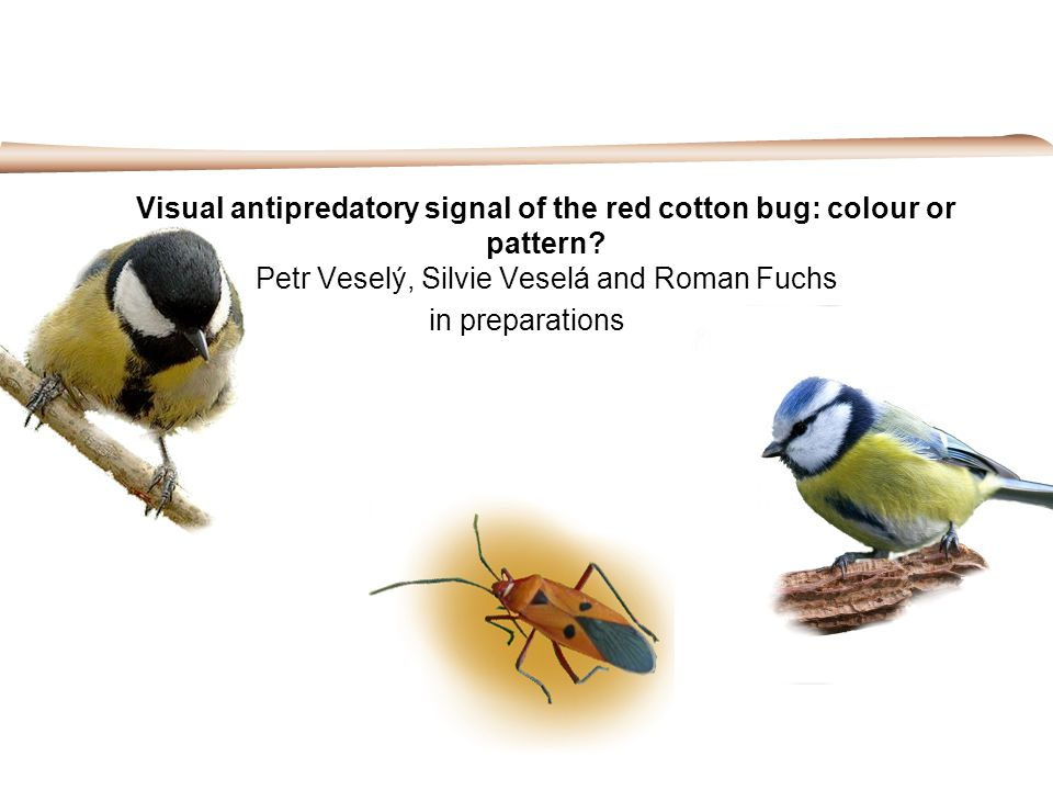 Visual antipredatory signal of the red cotton bug: colour or pattern
