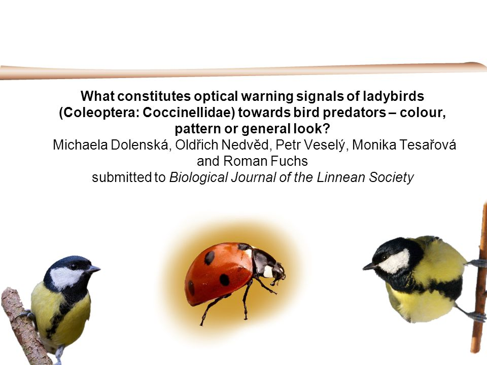 What constitutes optical warning signals of ladybirds (Coleoptera: Coccinellidae) towards bird predators – colour, pattern or general look.