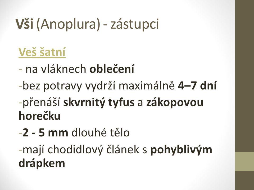 Vši (Anoplura) - zástupci