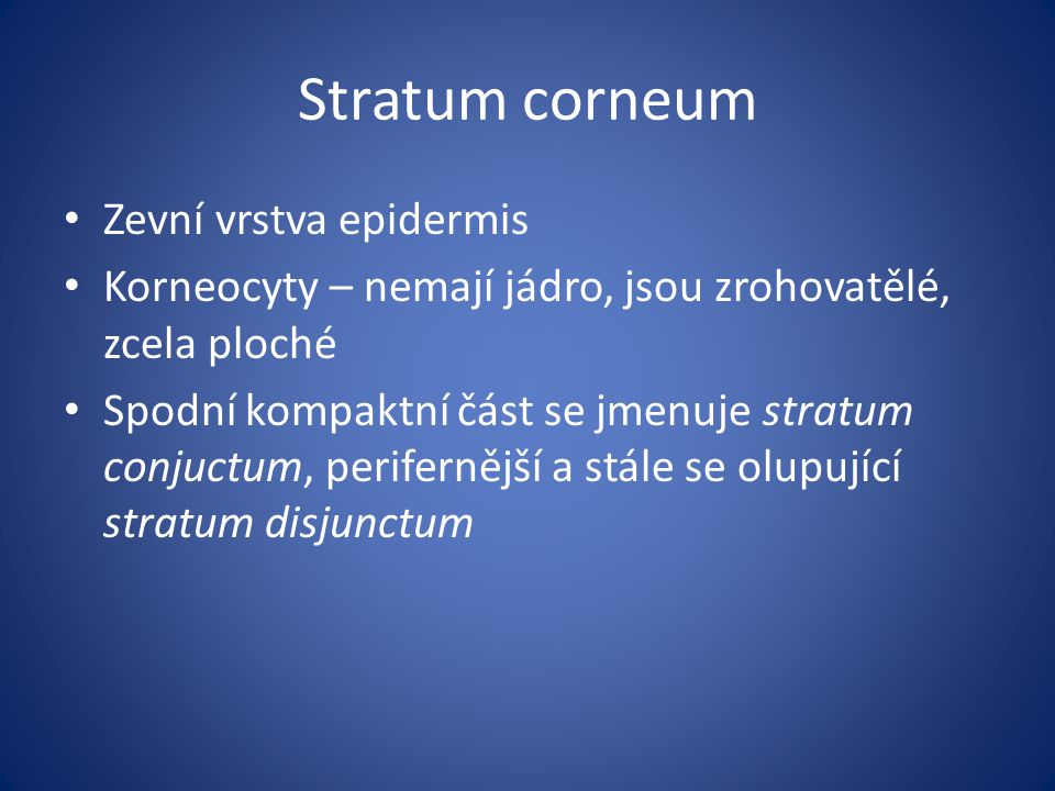 Stratum corneum Zevní vrstva epidermis