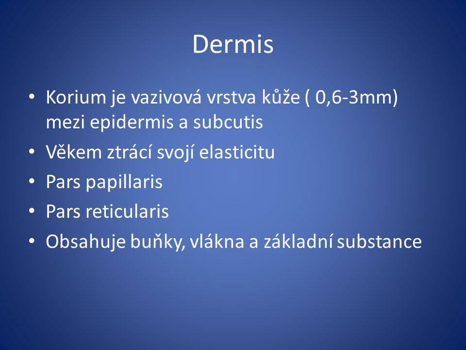 Dermis Korium je vazivová vrstva kůže ( 0,6-3mm) mezi epidermis a subcutis. Věkem ztrácí svojí elasticitu.