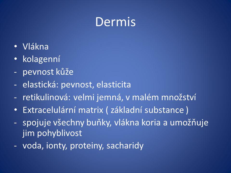 Dermis Vlákna kolagenní pevnost kůže elastická: pevnost, elasticita
