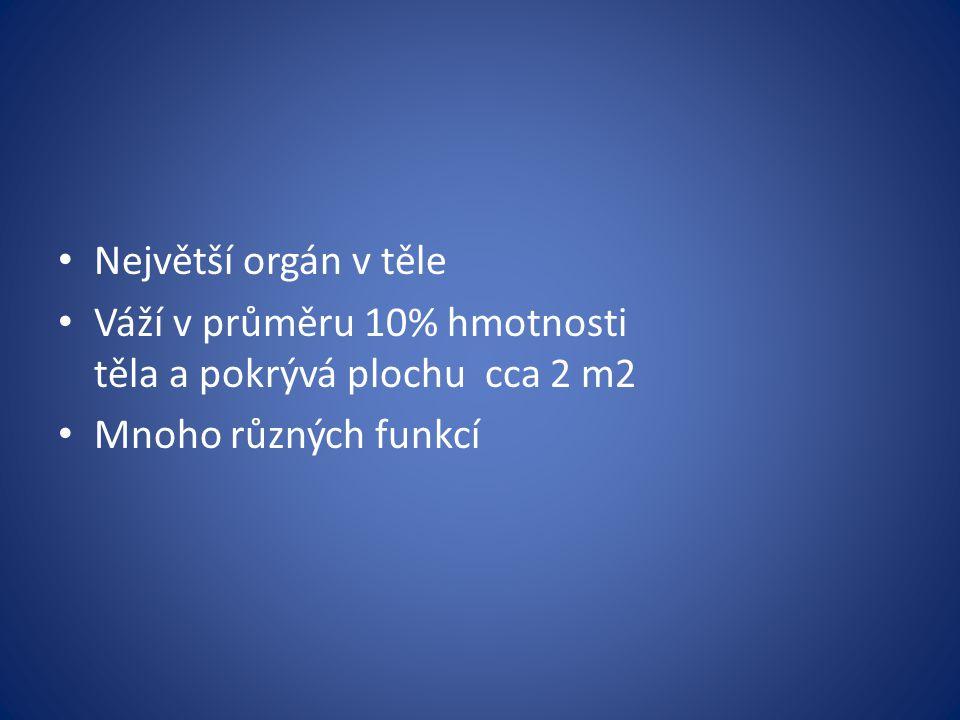 Největší orgán v těle Váží v průměru 10% hmotnosti těla a pokrývá plochu cca 2 m2.