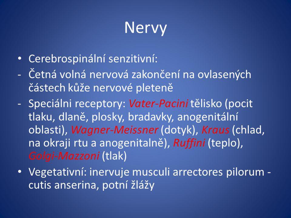 Nervy Cerebrospinální senzitivní: