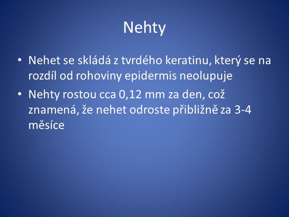 Nehty Nehet se skládá z tvrdého keratinu, který se na rozdíl od rohoviny epidermis neolupuje.