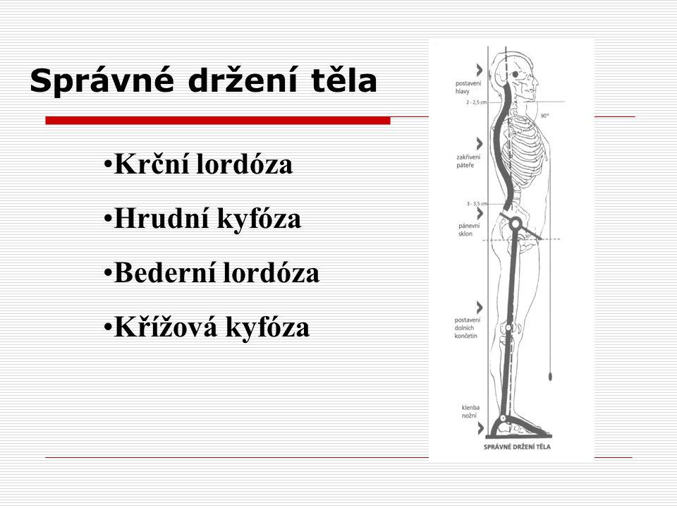 Správné držení těla Krční lordóza Hrudní kyfóza Bederní lordóza