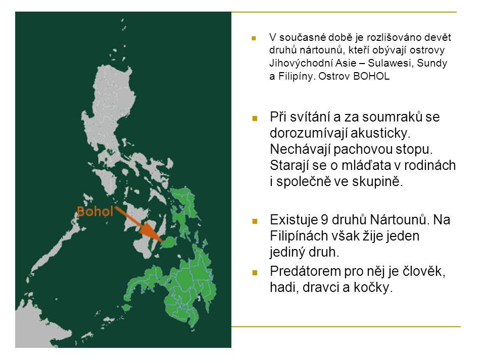 Existuje 9 druhů Nártounů. Na Filipínách však žije jeden jediný druh.