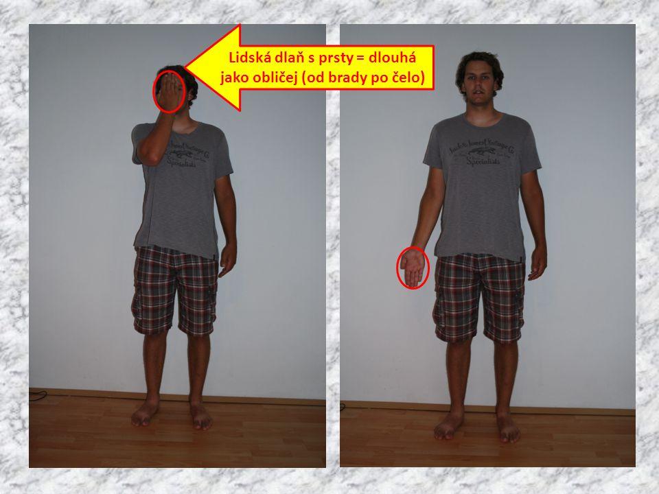 Lidská dlaň s prsty = dlouhá jako obličej (od brady po čelo)