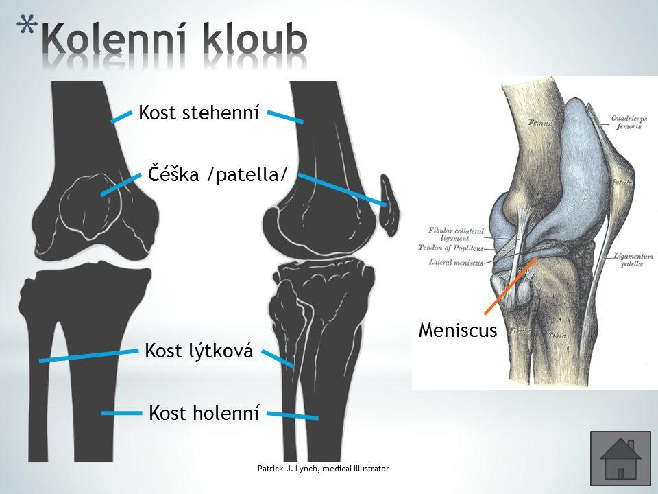 Kolenní kloub Kost stehenní Čéška /patella/ Meniscus Kost lýtková