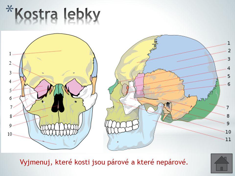 Kostra lebky Vyjmenuj, které kosti jsou párové a které nepárové.