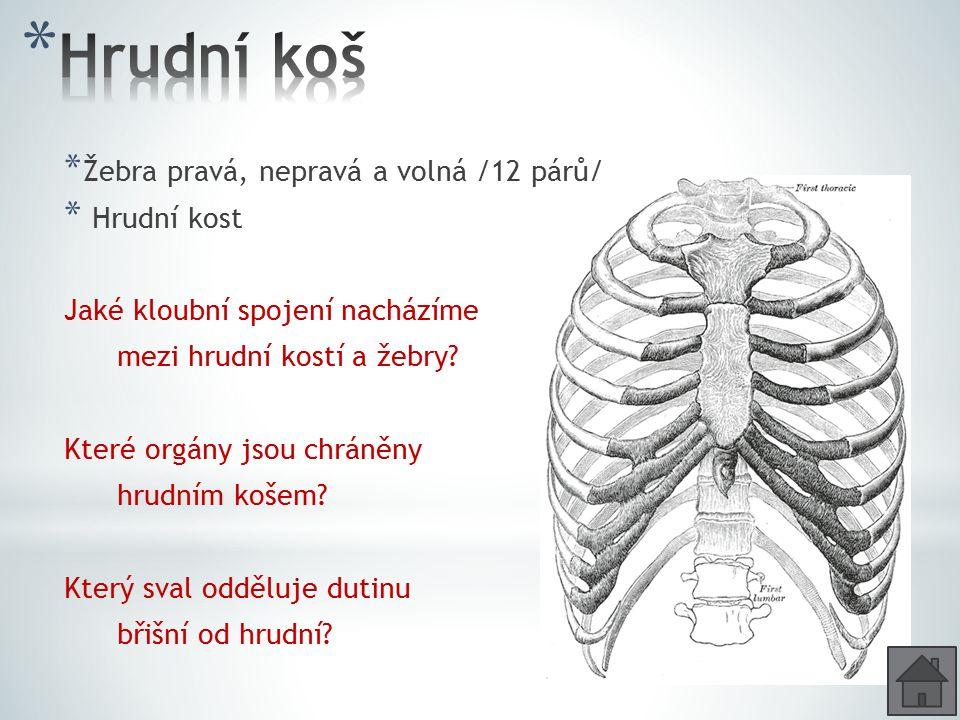 Hrudní koš Žebra pravá, nepravá a volná /12 párů/ Hrudní kost