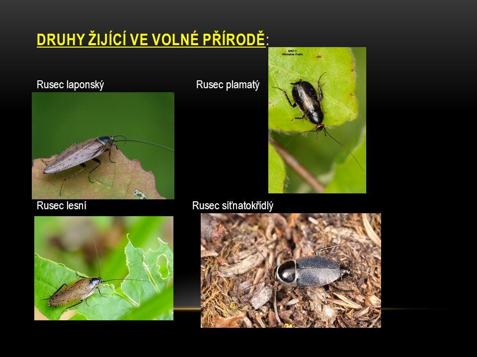 Druhy žijící ve volné přírodě: