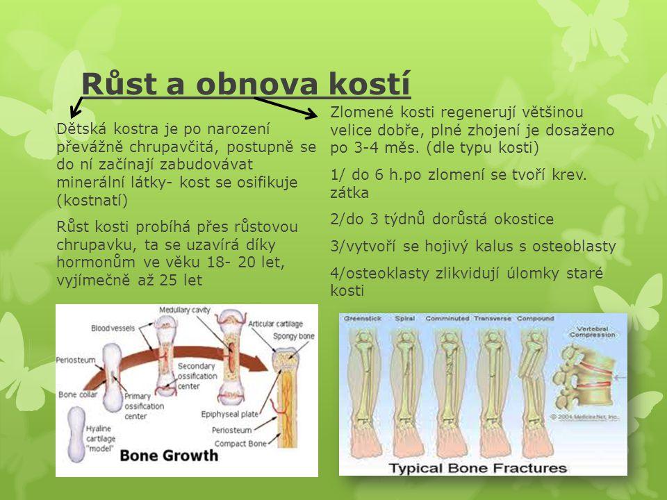 Růst a obnova kostí Zlomené kosti regenerují většinou velice dobře, plné zhojení je dosaženo po 3-4 měs. (dle typu kosti)