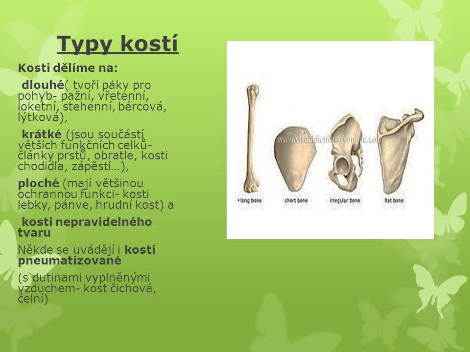Typy kostí Kosti dělíme na: