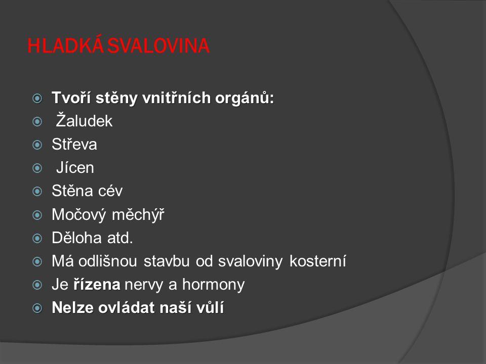 HLADKÁ SVALOVINA Tvoří stěny vnitřních orgánů: Žaludek Střeva Jícen