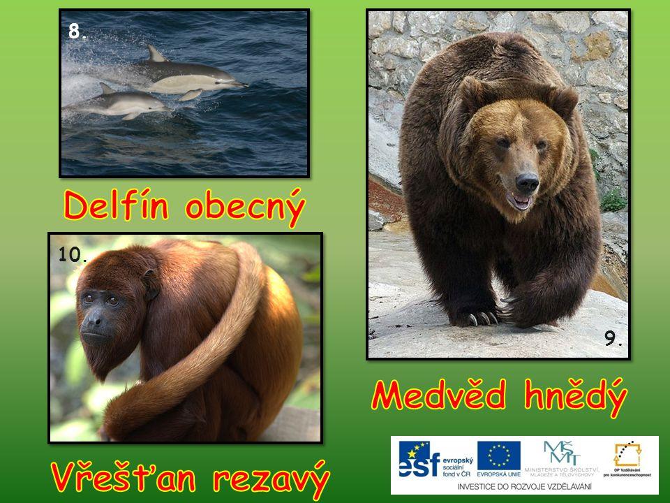 Delfín obecný Medvěd hnědý Vřešťan rezavý