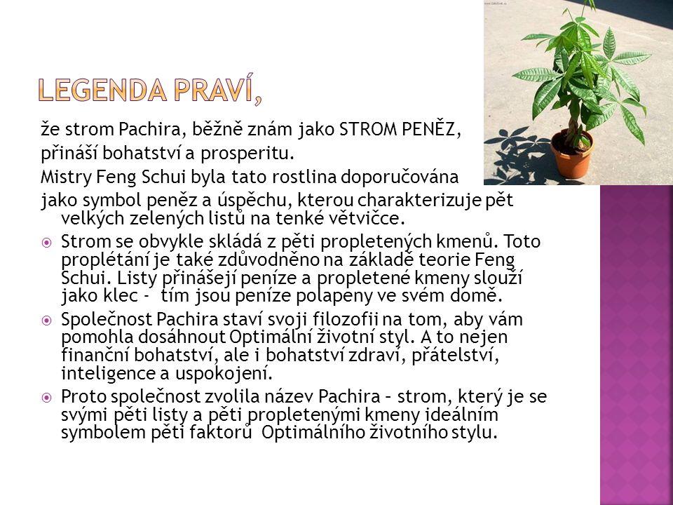 Legenda praví, že strom Pachira, běžně znám jako STROM PENĚZ,