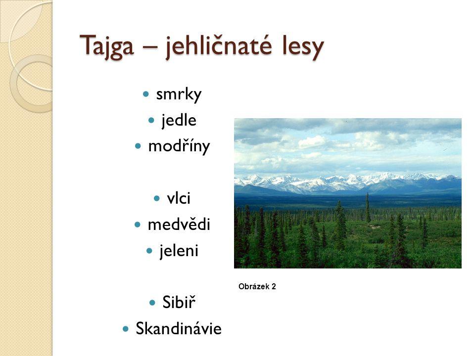 Tajga – jehličnaté lesy