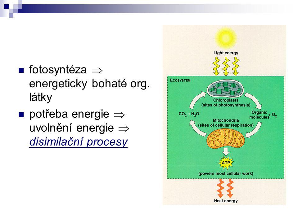 fotosyntéza  energeticky bohaté org. látky