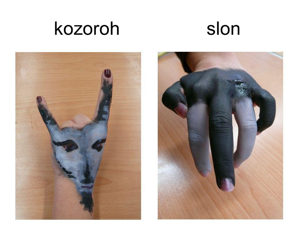 kozoroh slon