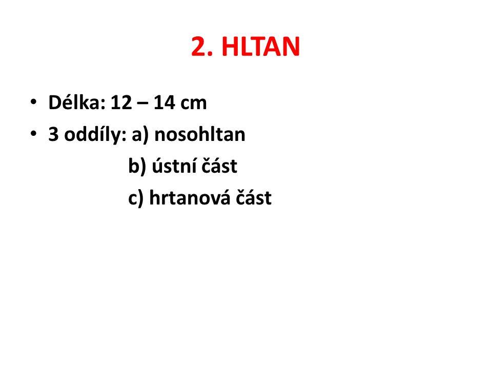 2. HLTAN Délka: 12 – 14 cm 3 oddíly: a) nosohltan b) ústní část